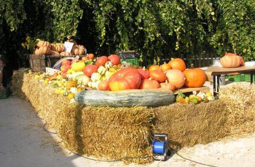March d 39 automne au jardin anglais rtn votre radio r gionale for Jardin anglais neuchatel