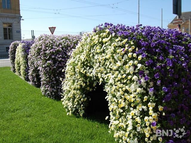 Un coin du jardin anglais reprend des couleurs rtn votre for Jardin anglais neuchatel